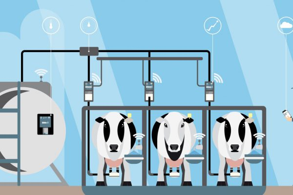 Dairy Management System is an Emerging Economic Engine for Rural Landscape in India